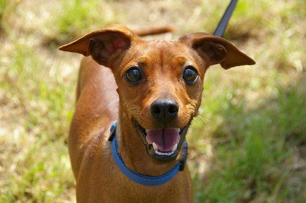 Собака картинки и фото для детей - красивые и прикольные 3