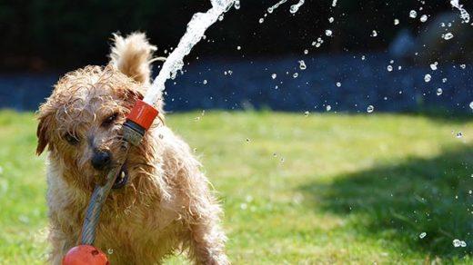 Собака картинки и фото для детей - красивые и прикольные 10