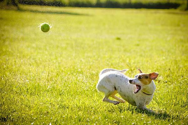 Собака картинки и фото для детей - красивые и прикольные 11