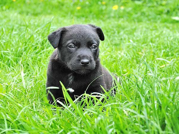 Собака картинки и фото для детей - красивые и прикольные 8