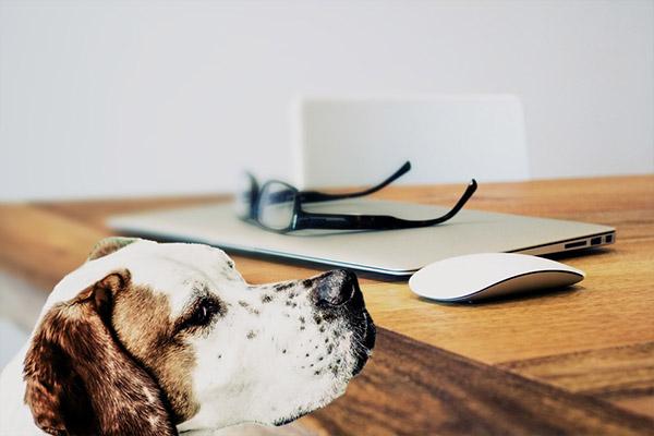 Собака картинки и фото для детей - красивые и прикольные 9