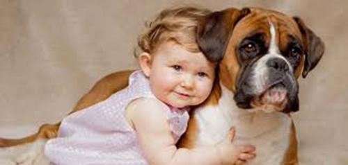Картинки домашних животных для детей - красивые фото и картинки 6
