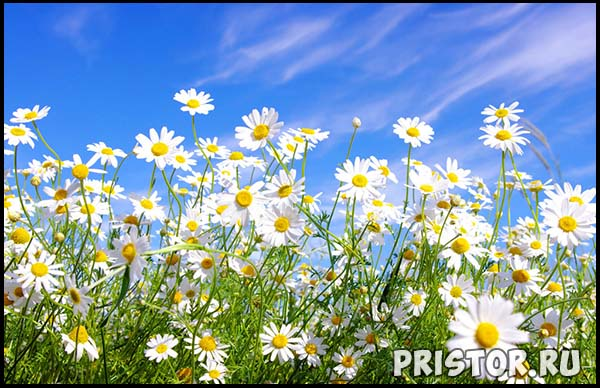 Фото лета, природа красивые фото и картинки лета 5