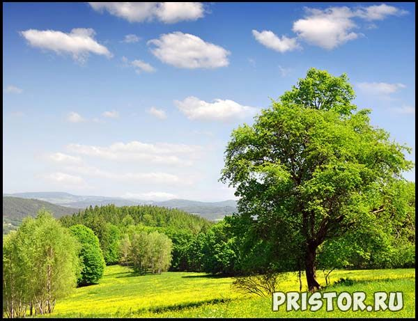 Фото лета, природа красивые фото и картинки лета 6