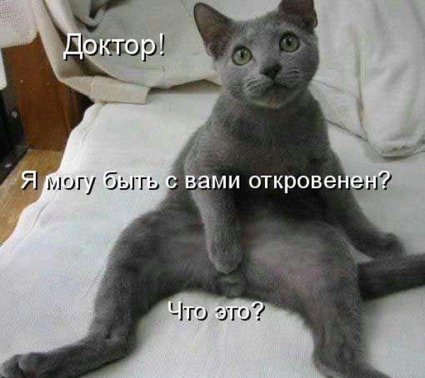 Смешные картинки с животными - с надписями смотреть 11