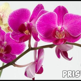 Комнатные цветы - каталог с фотографиями, обзор цветов 3