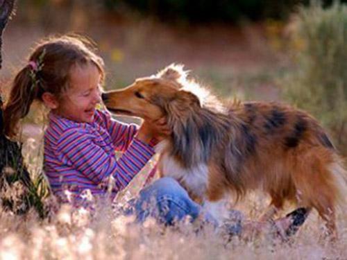 Картинки домашних животных для детей - красивые фото и картинки 8