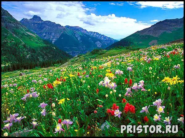 Фото лета, природа красивые фото и картинки лета 10