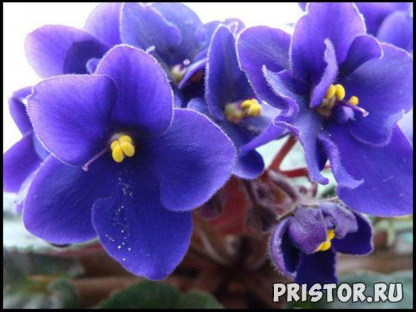 Комнатные цветы - каталог с фотографиями, обзор цветов 5
