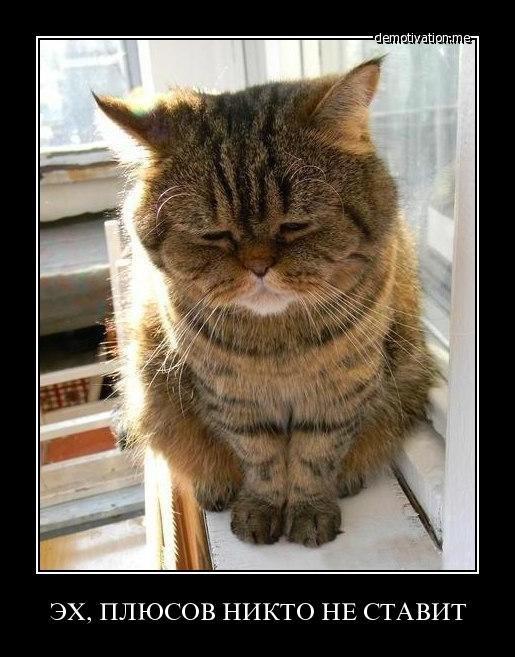 Демотиваторы про котов смешные, ржачные демотиваторы с котами 1