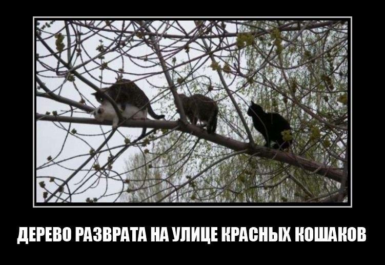 Демотиваторы про котов смешные, ржачные демотиваторы с котами 10