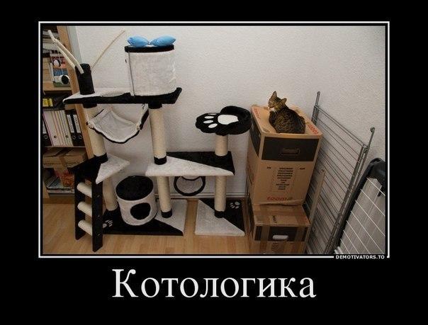 Демотиваторы про котов смешные, ржачные демотиваторы с котами 11
