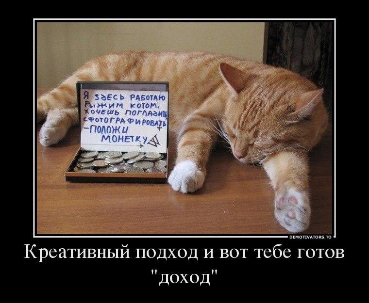 Демотиваторы про котов смешные, ржачные демотиваторы с котами 12