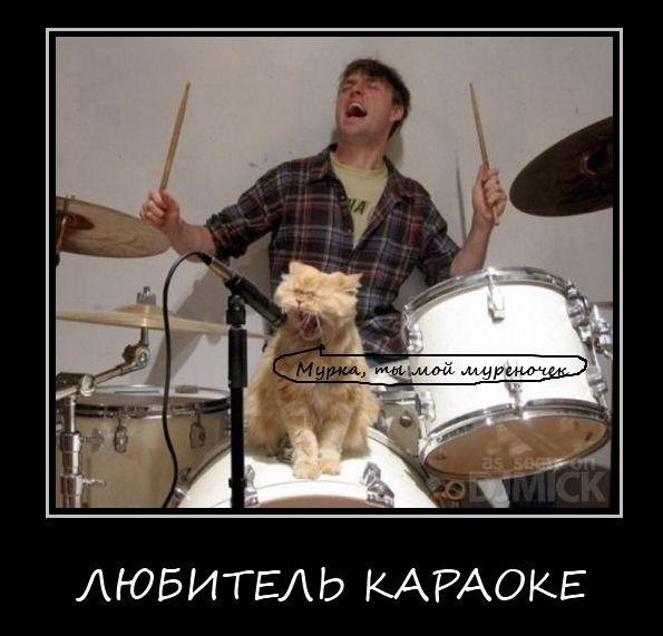 Демотиваторы про котов смешные, ржачные демотиваторы с котами 13