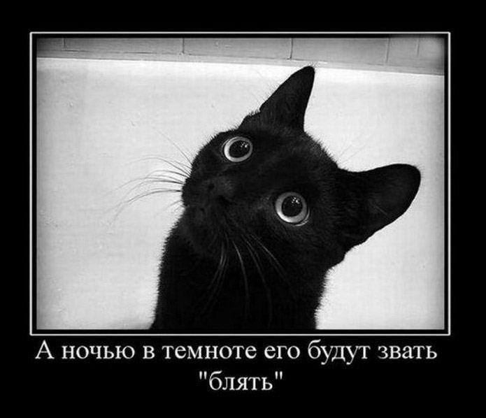 Демотиваторы про котов смешные, ржачные демотиваторы с котами 15