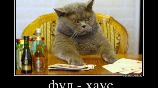 Демотиваторы про котов смешные, ржачные демотиваторы с котами 17
