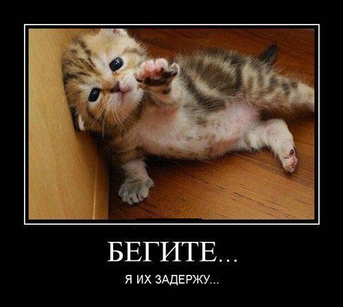 Демотиваторы про котов смешные, ржачные демотиваторы с котами 8
