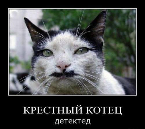 Демотиваторы про котов смешные, ржачные демотиваторы с котами 9