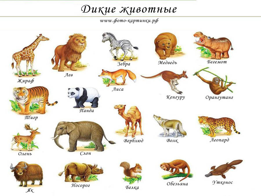 Дикие животные картинки для детей - красивые и прикольные 2