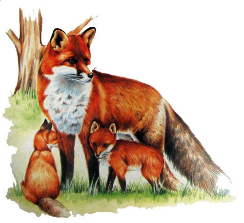 Дикие животные картинки для детей - красивые и прикольные 5