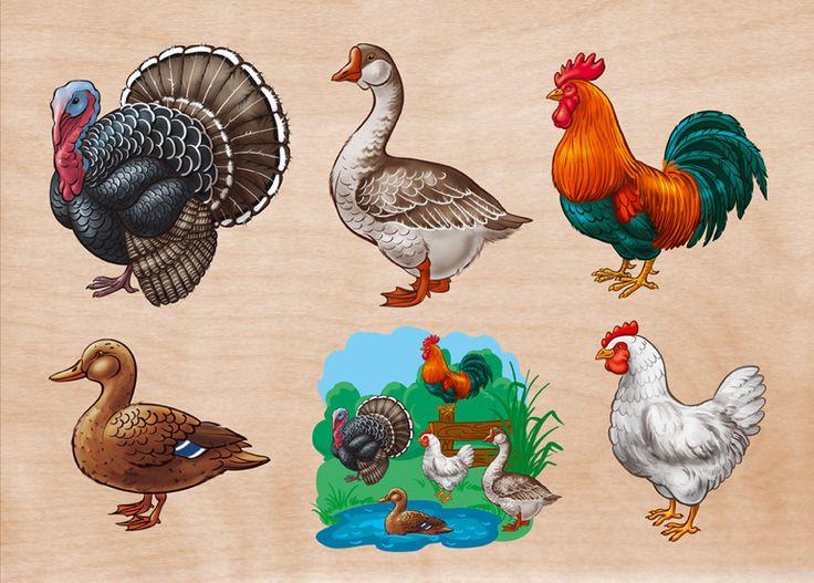 Домашние птицы - картинки для детского сада смотреть бесплатно 1