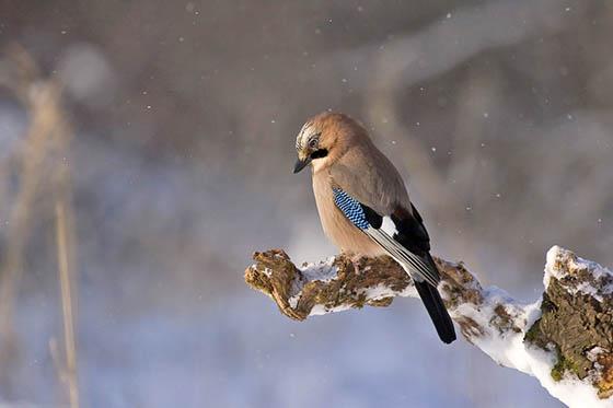 Живая природа зимой - фото красивые, удивительные, интересные 14