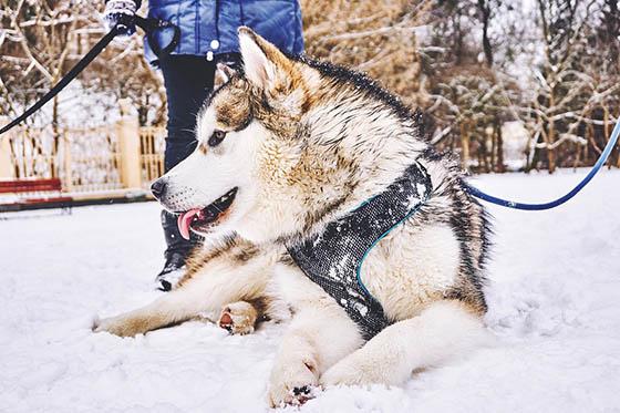 Живая природа зимой - фото красивые, удивительные, интересные 4