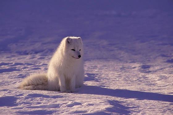 Живая природа зимой - фото красивые, удивительные, интересные 6