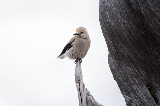 Живая природа зимой - фото красивые, удивительные, интересные 9