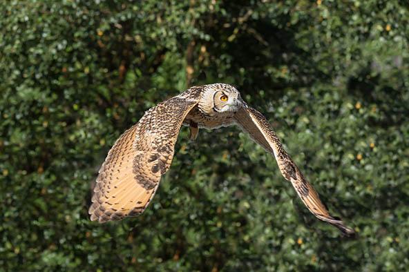 Живая природа картинки, картинки природы и животных - смотреть 10