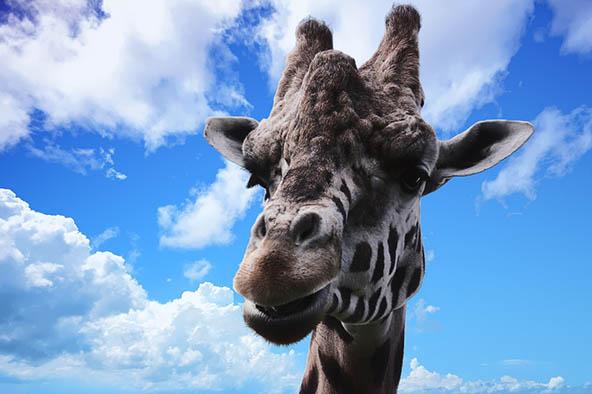 Живая природа картинки, картинки природы и животных - смотреть 11