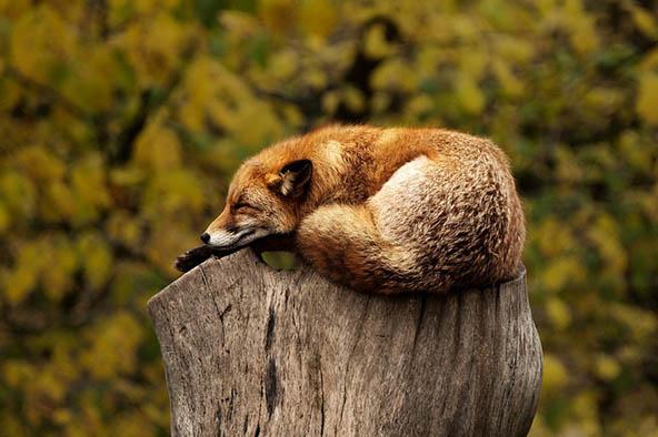 Живая природа картинки, картинки природы и животных - смотреть 17