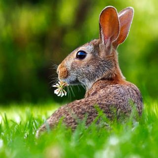 Живая природа картинки, картинки природы и животных - смотреть 18