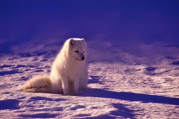 Живая природа картинки, картинки природы и животных - смотреть 19