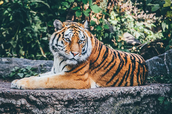 Живая природа картинки, картинки природы и животных - смотреть 2