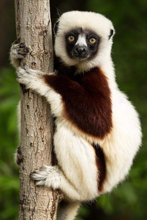 Живая природа картинки, картинки природы и животных - смотреть 4