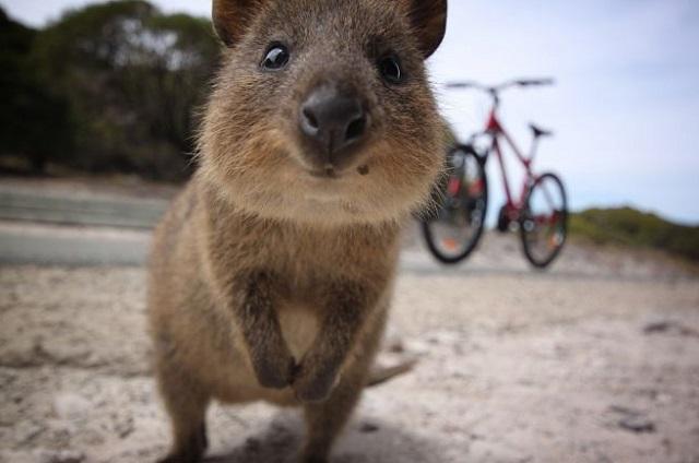 Забавные животные - картинки и фото, смешные животные - картинки 9