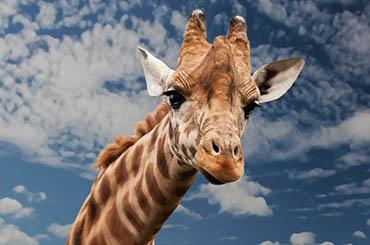 Интересные факты о животных для детей - 30 фактов 11