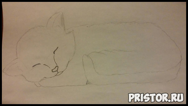 Как нарисовать котенка поэтапно карандашом - смотреть с фото 3