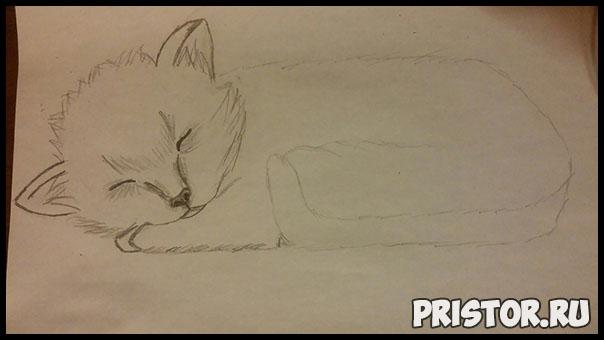 Как нарисовать котенка поэтапно карандашом - смотреть с фото 4