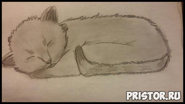 Как нарисовать котенка поэтапно карандашом - смотреть с фото 5