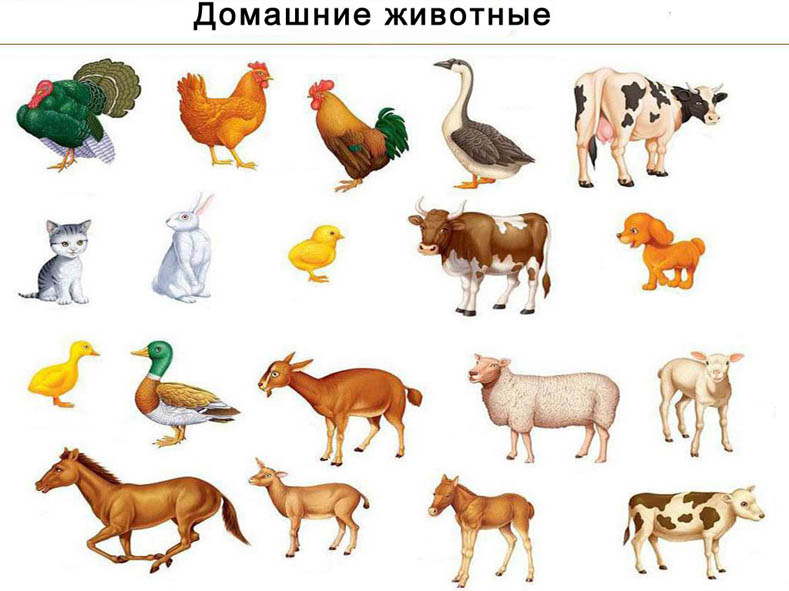 animals and man essay Animal farm - essay essays: over 180,000 animal farm - essay essays, animal farm - essay term papers in which animals talk and act like men and women.