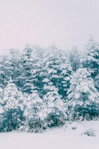 Картинки зима на телефон - красивые и прикольные скачать бесплатно 2
