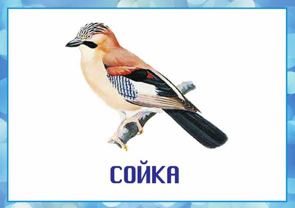 Картинки зимующие птицы - для детского сада красивые, прикольные 10