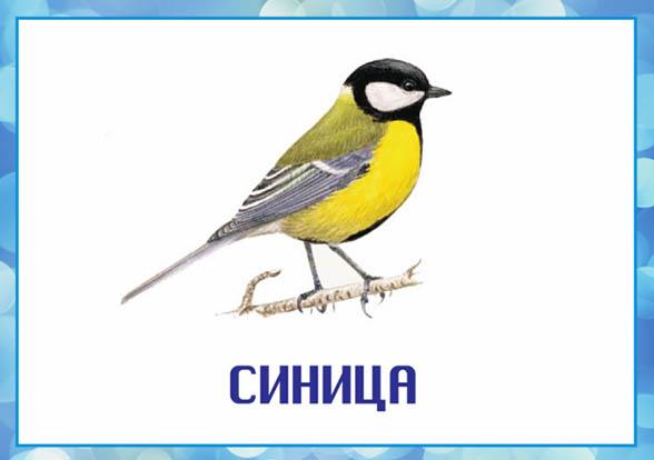 Картинки зимующие птицы - для детского сада красивые, прикольные 12