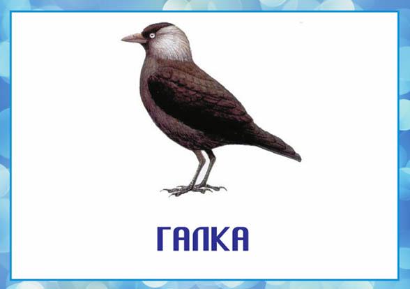 Картинки зимующие птицы - для детского сада красивые, прикольные 15