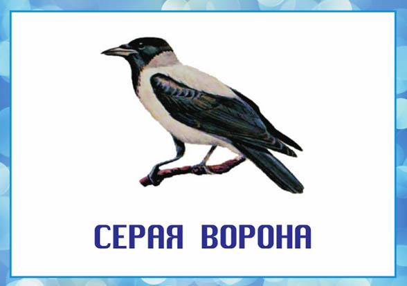 Картинки зимующие птицы - для детского сада красивые, прикольные 2