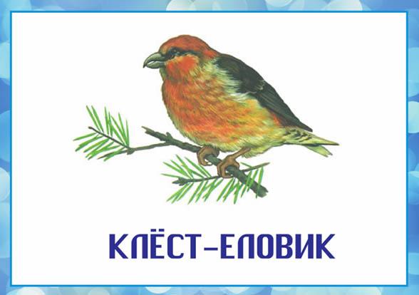 Картинки зимующие птицы - для детского сада красивые, прикольные 3
