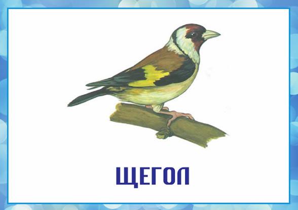 Картинки зимующие птицы - для детского сада красивые, прикольные 4