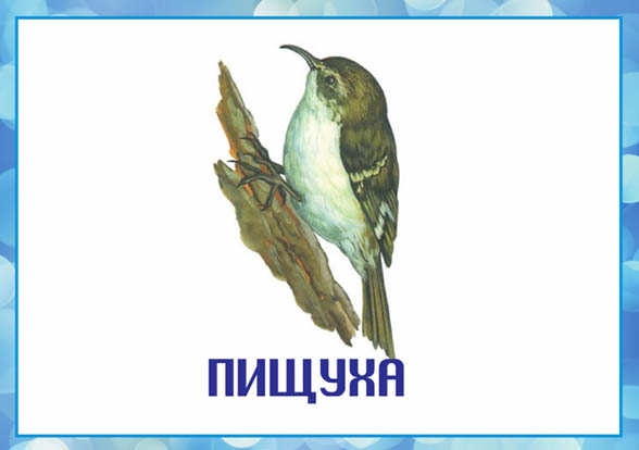Картинки зимующие птицы - для детского сада красивые, прикольные 6